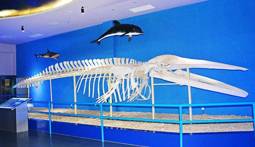 《海洋动物的骨骼》